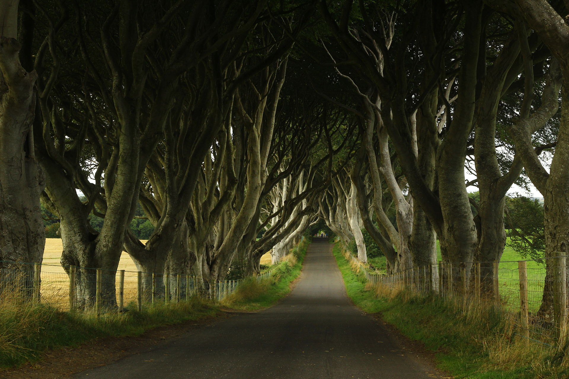 Game of Thrones Forest Trees